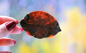 Картинка осень, осеннее настроение, опавший лист