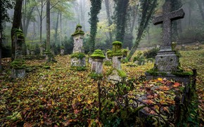 Обои листья, могилы, кладбище