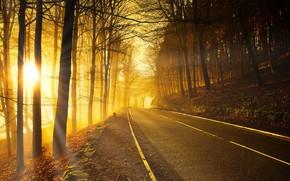 Картинка дорога, лес, осень, свет, утро