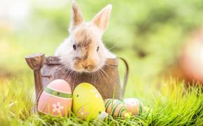 Обои трава, decoration, bunny, Easter, Пасха, happy, кролик, яйца крашеные, flowers, spring, eggs, цветы
