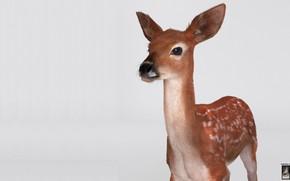 Картинка олень, арт, Hossein Diba, Fawn Deer