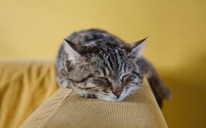 Картинка морда, Кот, лежит, полосатый