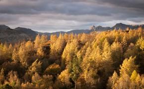 Картинка осень, деревья, горы