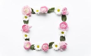 Картинка цветы, ромашки, розовые, pink, flowers, пионы, peonies, camomile, frame, floral