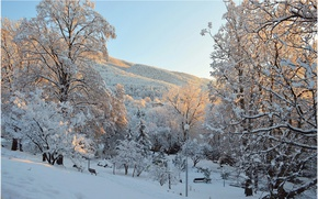 Картинка Зима, Деревья, Снег, Парк, Мороз, Winter, Frost, Park, Snow, Trees