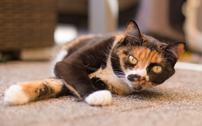 Картинка глаза, кот, лежит