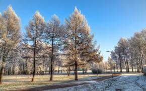 Картинка небо, солнце, снег, деревья, парк, дорожка, Санкт-Петербург, Россия, Park Esenina, Парк Есенина