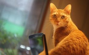 Обои кот, гаджет, фотосессия, телефон, смартфон, котэ, помещение, удивление, мордашка, мобильник, мобильный, выражение, окно, портрет, кошка, ...
