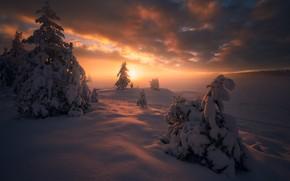 Обои закат, Норвегия, ели, Ringerike, Рингерике, Norway, деревья, зима, снег, сугробы