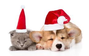 Обои котенок, шапка, Рождество, щенок, Новый год, котёнок, cat, dog, колпак, спят, 2018, New Year, sleep