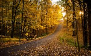 Обои осень, парк, листва, дорога