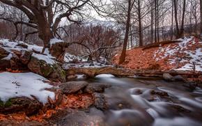 Обои камни, осень, лес, ручей, листья, деревья, природа, снег