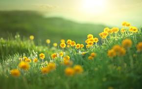 Обои landscape, пейзаж, nature, лето, холмы, field, summer, поле, природа, цветы, flowers, hills