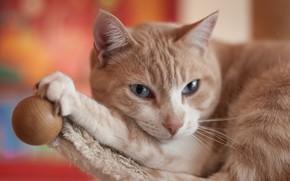 Картинка кошка, кот, киса