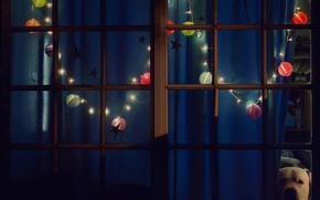 Обои рождество, окно, новый год, вечер, гирлянда, огни, собака