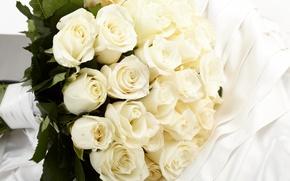 Обои white, букет, roses, белые розы, flowers