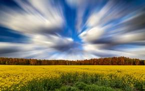 Картинка поле, небо, деревья, пейзаж, красота