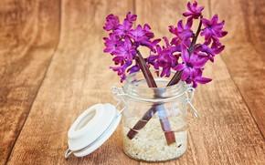 Картинка цветы, Hyacinths, wood, букет, Purple