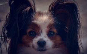 Картинка взгляд, собака, мордочка