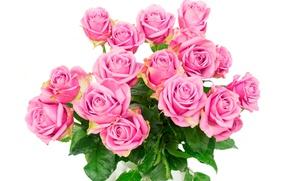 Обои розы, букет, roses, розовые розы, flowers, pink