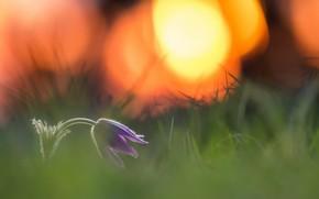 Обои цветок, природа, весна