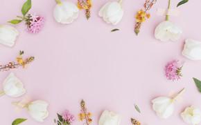 Картинка flowers, tulips pink, beatuful