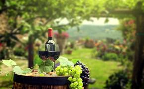Обои бутылка, бочка, фон, сад, вино, листья, боке, зелень, пробки, бокалы, виноград