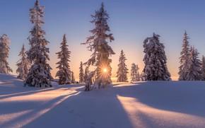 Картинка зима, солнце, снег, деревья, природа, дома, вечер