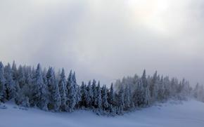Картинка зима, снег, деревья, туман