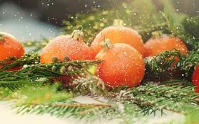 Картинка праздник, новый год, цитрус, мандарин, ветки ели