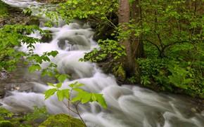 Картинка вода, деревья, ручей, поток