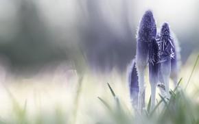 Картинка иней, цветы, природа
