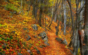 Картинка Осень, Деревья, Лес, Fall, Листва, Autumn, Colors, Forest, Trees, Листопад, Leaves