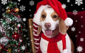 Картинка тепло, шапка, елка, собака, Новый год, Christmas, winter, dogs, бигль, Holidays
