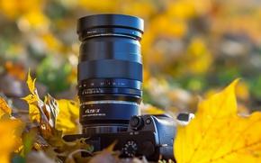 Картинка листья, камера, боке, SONY, SONY alpha 6000