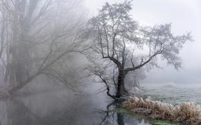 Картинка природа, туман, река
