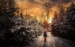 Обои зима, лес, закат, человек, прогулка