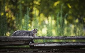 Картинка боке, на заборе, полосатый кот
