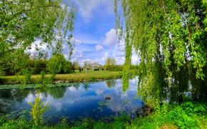 Картинка природа, красота, весна