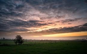 Обои закат, поле, дерево