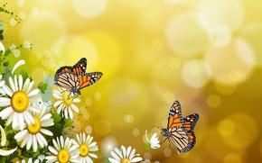 Картинка бабочки, настроение, бабочка, ромашки, обои на рабочий стол