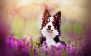 Картинка весна, цветы, Spring mood, собака
