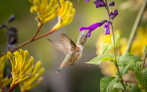 Картинка птица, перья, клюв, колибри, окрас, перышки