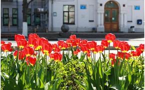 Картинка зелень, солнце, цветы, фон, окна, шар, дома, красота, размытие, Город, двери, таблички, красиво, тюльпаны, красные, …