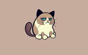 Картинка кошка, кот, минимализм, grumpy cat, соус тардар, сердитый котик, tardar sauce