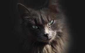 Обои фон, кошка, киса, взгляд