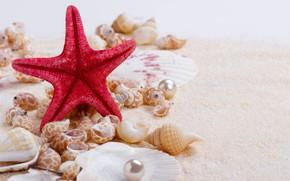 Картинка песок, ракушки, wood, sand, marine, still life, жемчужина, starfish, seashells, perl