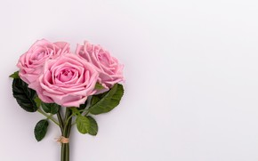 Картинка цветы, розы, букет, розовые, pink, flowers, roses, tender