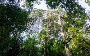 Картинка light, forest, trees, jungle, nature, natural, malaysia, trekking