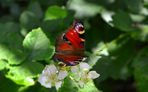 Картинка Макро, Цветы, Бабочка, Flowers, Macro, Butterfy